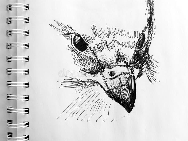 Testa dell'uccello illustrazione di stock