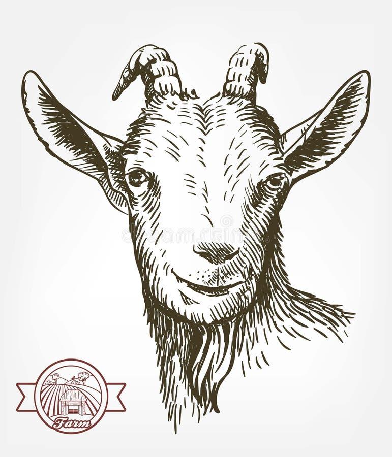 Testa della capra bestiame pascolo animale schizzo disegnato a mano royalty illustrazione gratis