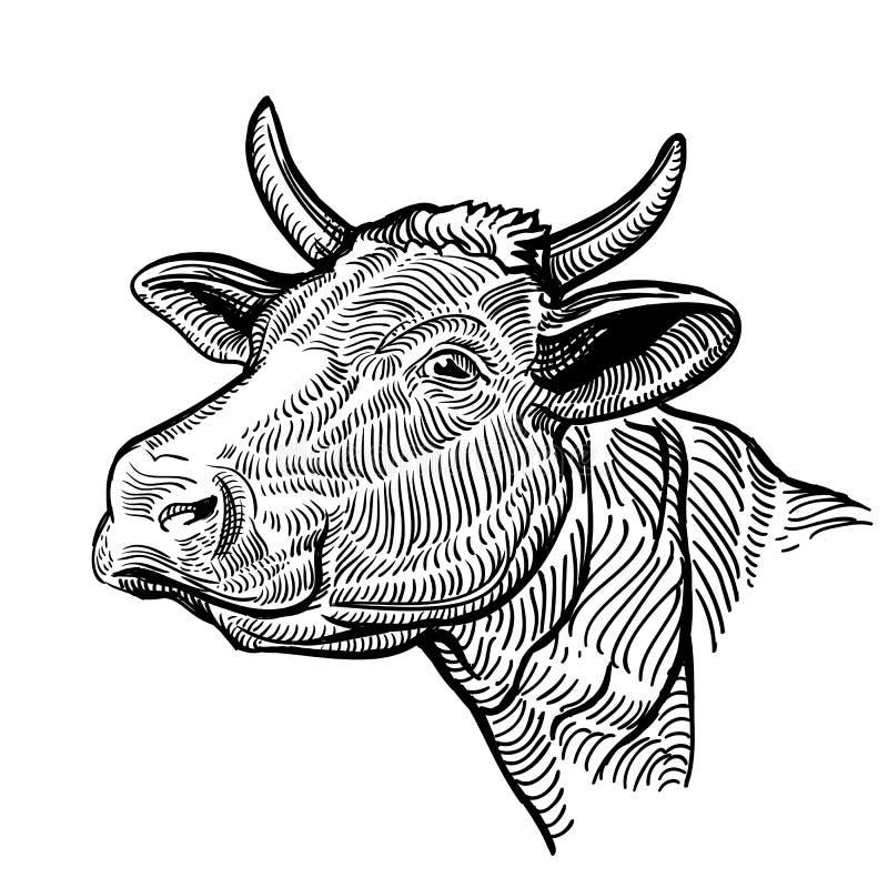 Testa della mucca, in uno stile grafico Illustrazione d'annata isolata su fondo bianco Mucca del muso royalty illustrazione gratis