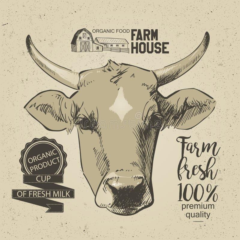 Testa delle mucche illustrazione di stock