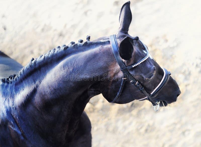 Testa di bel cavallo da dressage con una manica intrecciata immagini stock