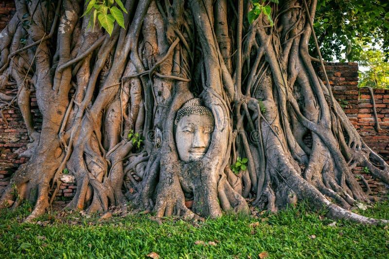 Testa di Buddha in fico a Wat Mahathat, parco storico di Ayutthaya, Tailandia immagini stock