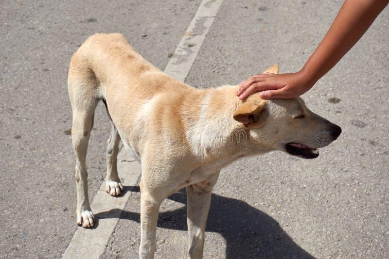 Testa di cane di Pat fotografia stock