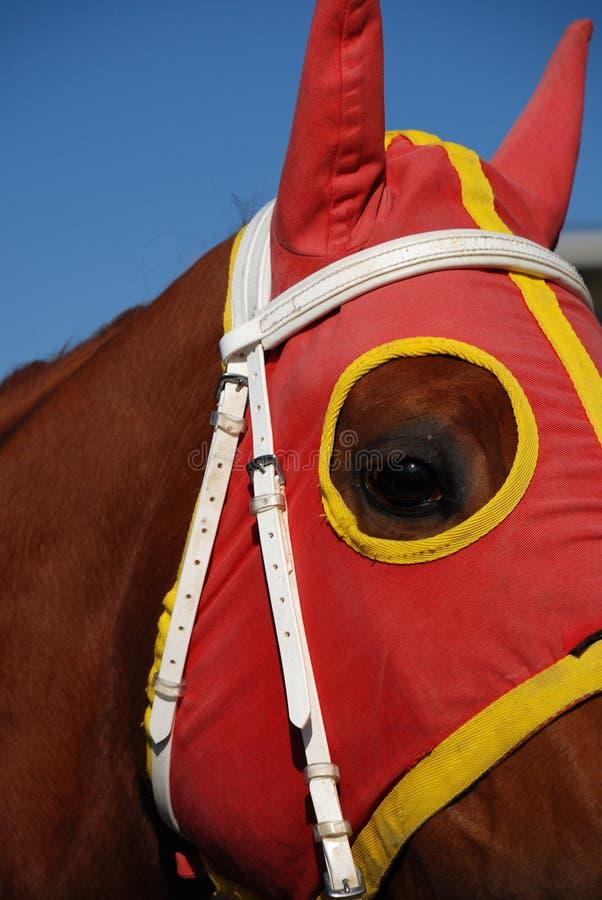 Testa di cavallo con i paraocchi fotografia stock
