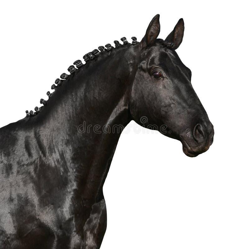 Testa di cavallo nera isolata su bianco immagini stock