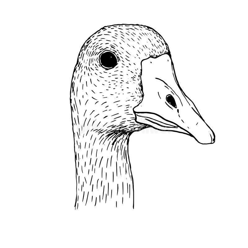 Testa di disegno dell'inchiostro dell'oca illustrazione di stock