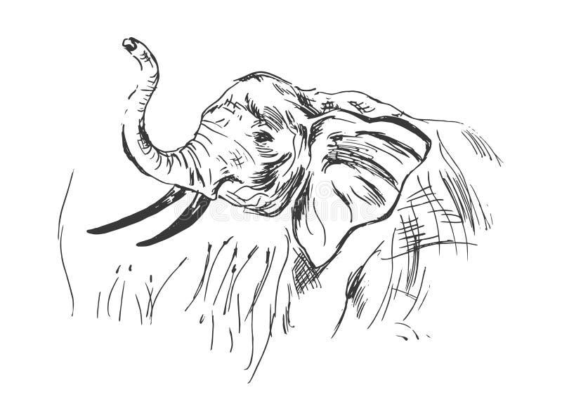 Testa di un elefante illustrazione di stock