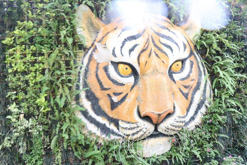 TESTA DI UNA TIGRE AL REGNO DELLA TIGRE IN TAILANDIA fotografie stock