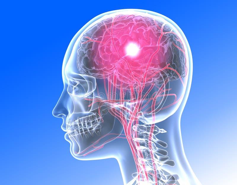 testa umana trasparente dell'illustrazione 3D con gli organi interni e l'attività nel cervello - ³ n di Ilustracià illustrazione vettoriale