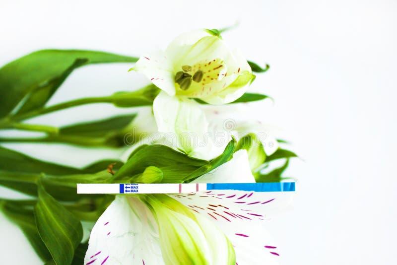 Teste de gravidez positivo com um ramalhete das flores brancas do alstroemeria imagens de stock royalty free
