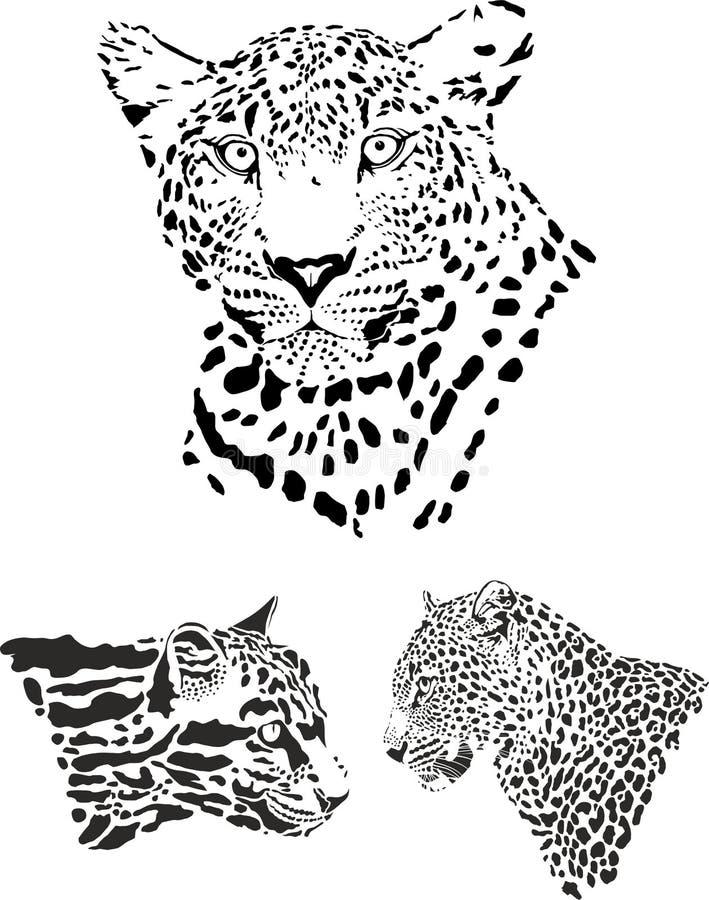 Teste del leopardo, illustrazione in bianco e nero di vettore immagini stock libere da diritti