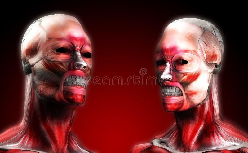 Teste del muscolo royalty illustrazione gratis