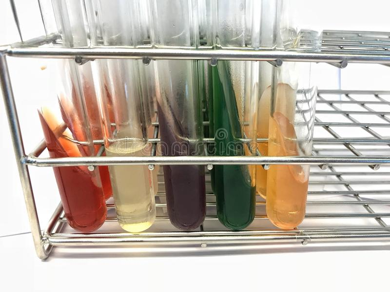 Teste do Biochem fotografia de stock royalty free