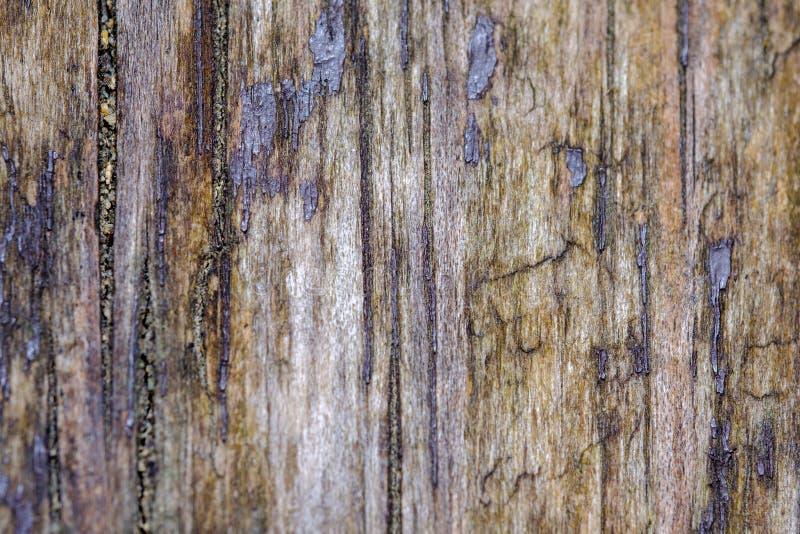 Teste padr?o ?spero da textura da madeira velha fotos de stock