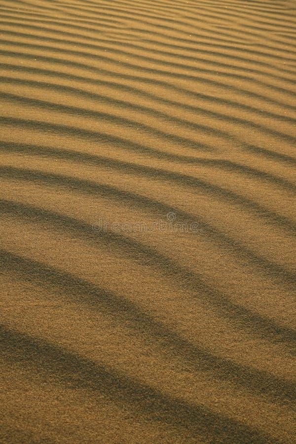 Teste padrão abstrato de ondinhas da areia do deserto na luz solar da noite na duna de areia de Huacachina no Peru imagens de stock