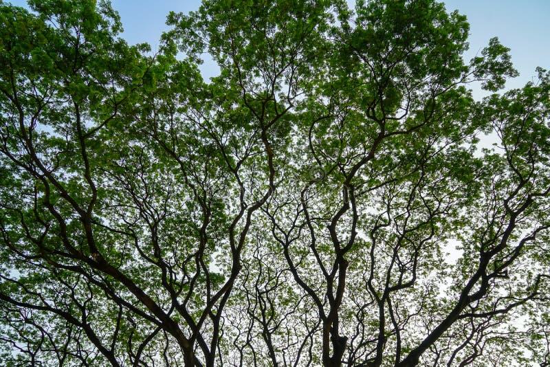 Teste padrão abstrato natural bonito da silhueta do gia largo da propagação fotos de stock