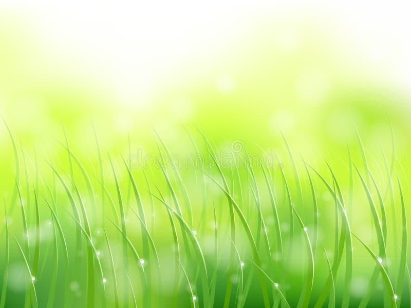 Teste padrão adiantado do softfocus do orvalho da grama da luz solar da manhã ilustração royalty free