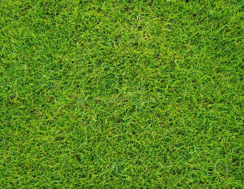 Teste padrão bonito da grama verde de Colseup do campo de golfe fotos de stock royalty free