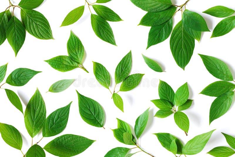 Teste padrão bonito da natureza de ramos verdes das folhas com textura detalhada Opinião superior das hortaliças, configuração li fotos de stock