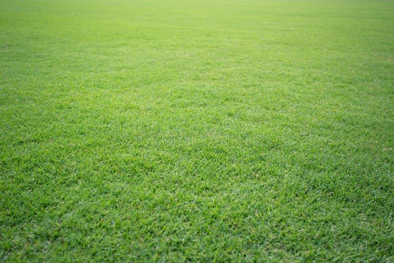 Teste padrão bonito do fundo do campo de futebol da grama verde da grama verde fresca para o esporte do futebol foto de stock