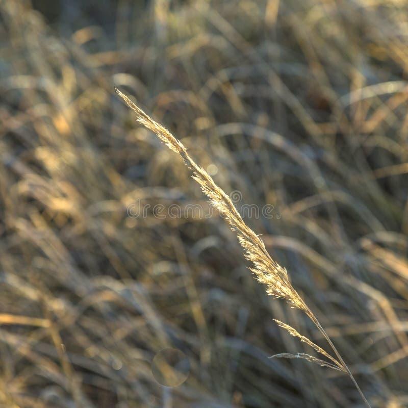 Teste padrão bonito do milho em detalhe fotografia de stock