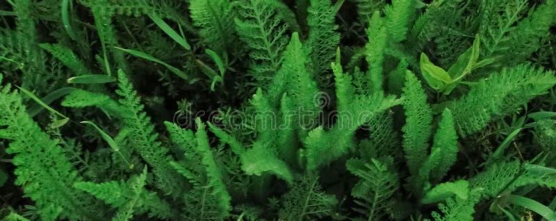 Teste padrão bonito para a bandeira com uma planta verde ilustração royalty free