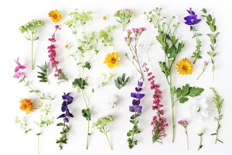 Teste padrão botânico do verão Composição floral do fewerfew, a Erica, as flores do sábio e do crisântemo e alquemila verde imagem de stock royalty free