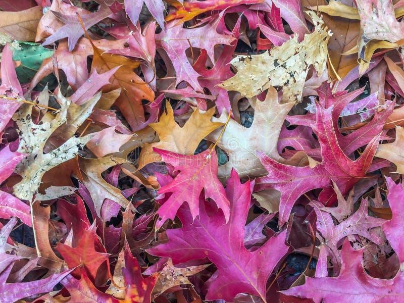 Teste padrão caído outono das folhas que cobre a textura sazonal colorida vívida à terra do fundo da floresta foto de stock royalty free
