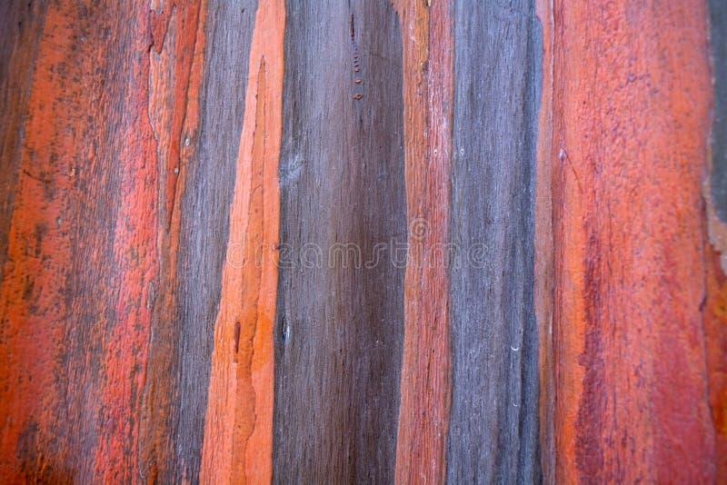 Teste padrão colorido da casca de árvore do eucalipto do arco-íris imagens de stock royalty free