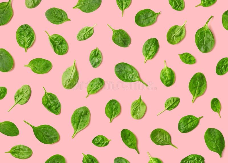 Teste padrão colorido das folhas frescas dos espinafres fotos de stock royalty free
