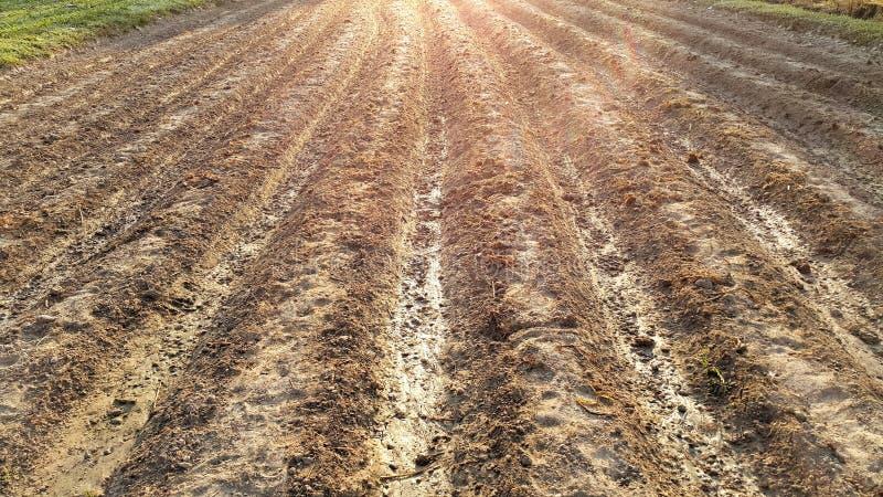 Teste padrão da fileira dos sulco de campos agrícolas arados foto de stock royalty free