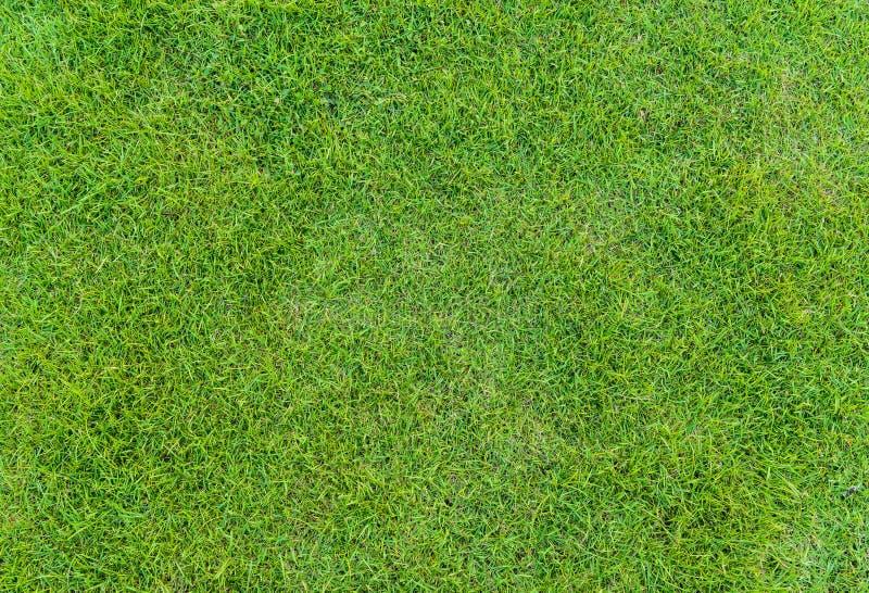 Teste padrão da grama verde do campo de golfe no por do sol tim imagem de stock