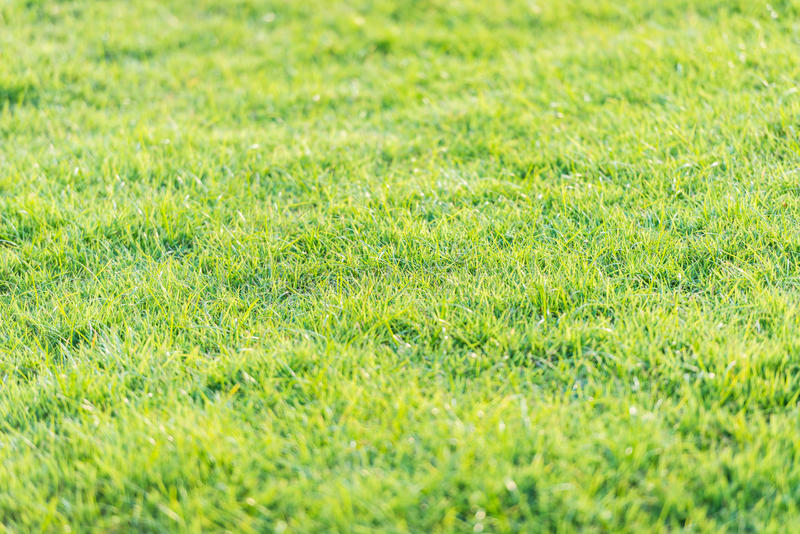 Teste padrão da grama verde do campo de golfe no por do sol tim fotos de stock