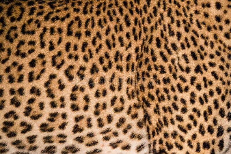 Teste padrão da pele do leopardo imagens de stock