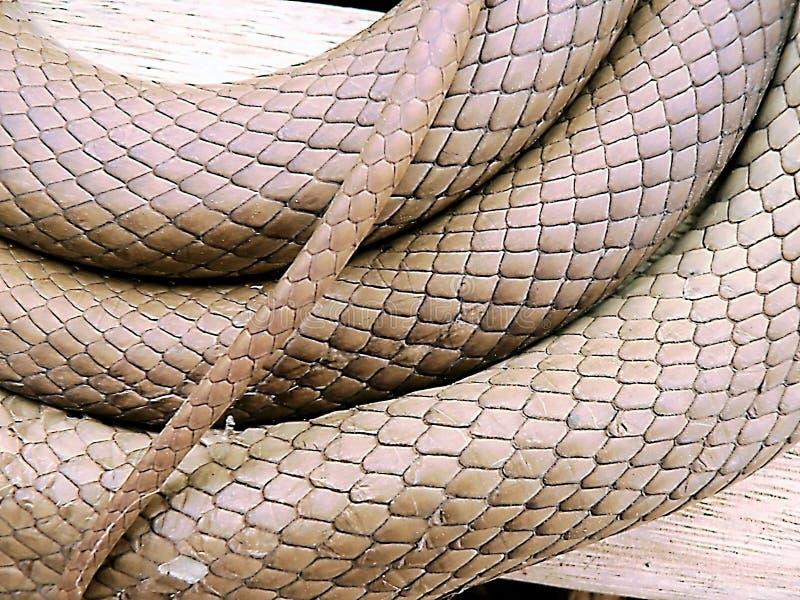 Teste padrão da pele na serpente de Brown foto de stock royalty free
