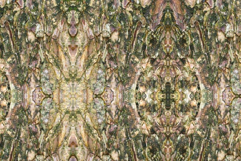 Teste padrão da textura da casca de árvore casca de madeira para o fundo fotografia de stock