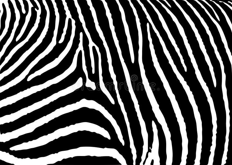 Teste padrão da zebra grande ilustração stock