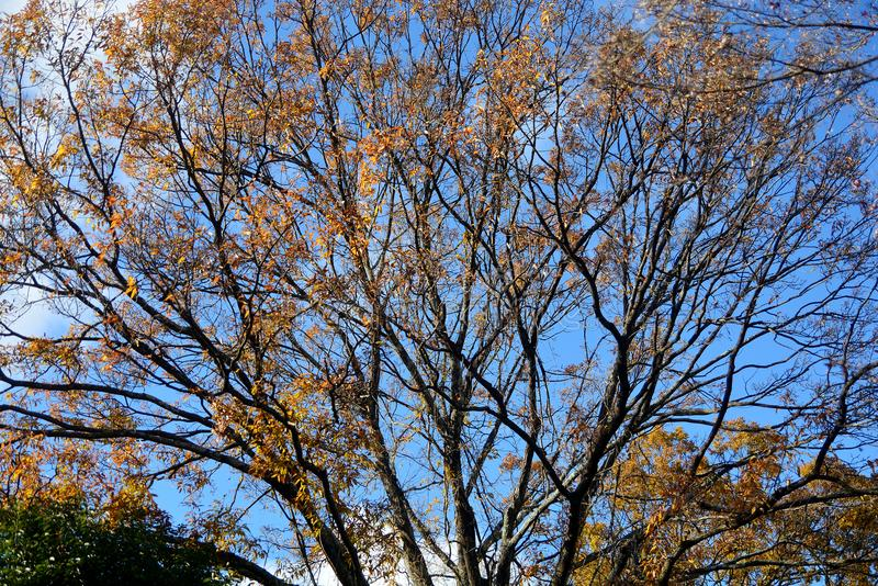 Teste padrão das árvores de floresta do outono fotografia de stock