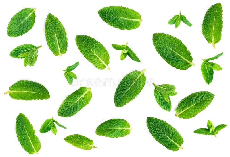 Teste padrão das folhas de hortelã fresca isolado no fundo branco, vista superior fotos de stock royalty free