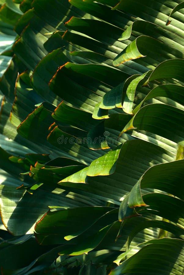 Teste padrão das folhas de palmeira imagens de stock