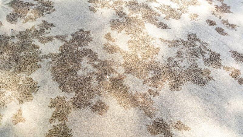 Teste padrão de caranguejos do bebedoiro automático da areia fotografia de stock