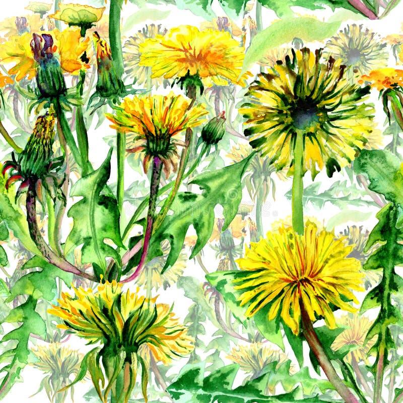 Teste padrão de flor do dente-de-leão do Wildflower em um estilo da aquarela isolado ilustração royalty free