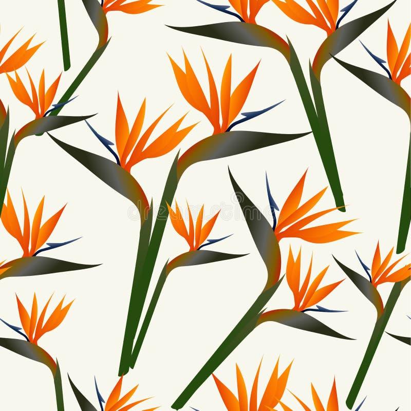 Teste padrão de flor do pássaro do paraíso ilustração do vetor