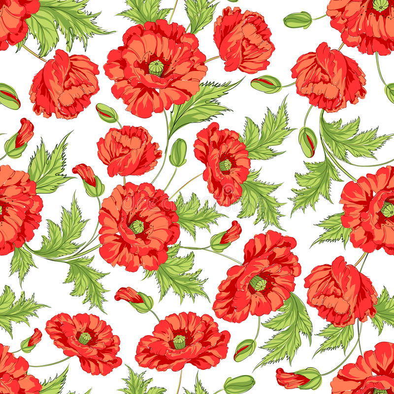 Teste padrão de flores da papoila. ilustração stock