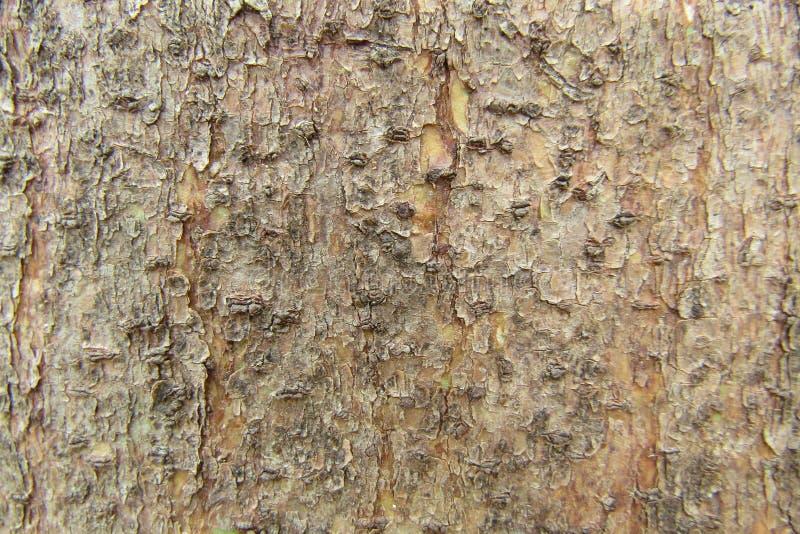 Teste padrão de madeira natural clássico fotografia de stock