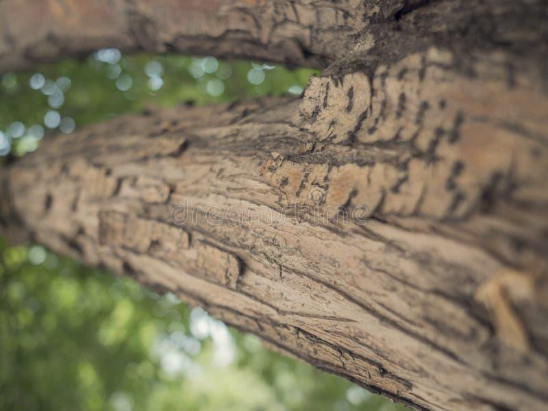 Teste padrão de madeira velho do fundo da textura da árvore foto de stock royalty free