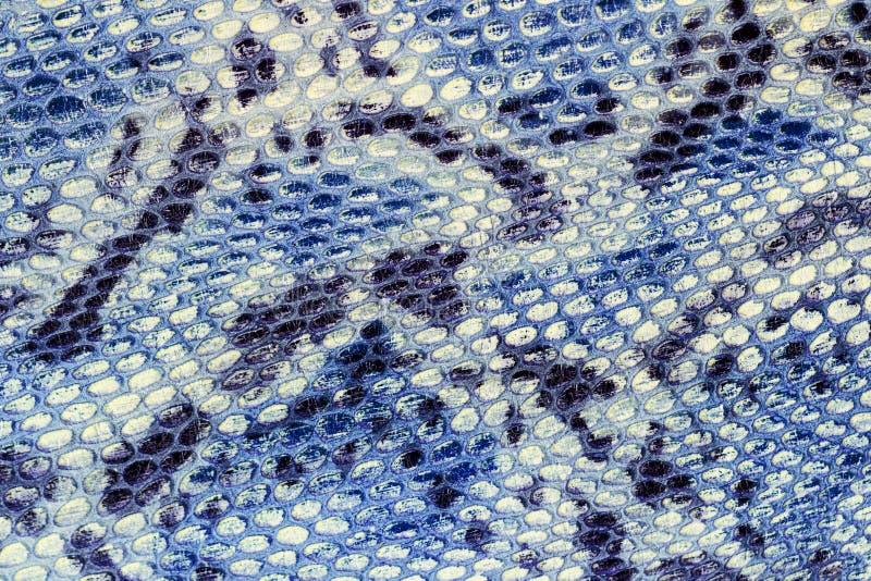 Teste padrão de Snakeskin no close-up de couro genuíno, imitação do réptil exótico, superfície da cor cinzenta azul brilhante, na foto de stock