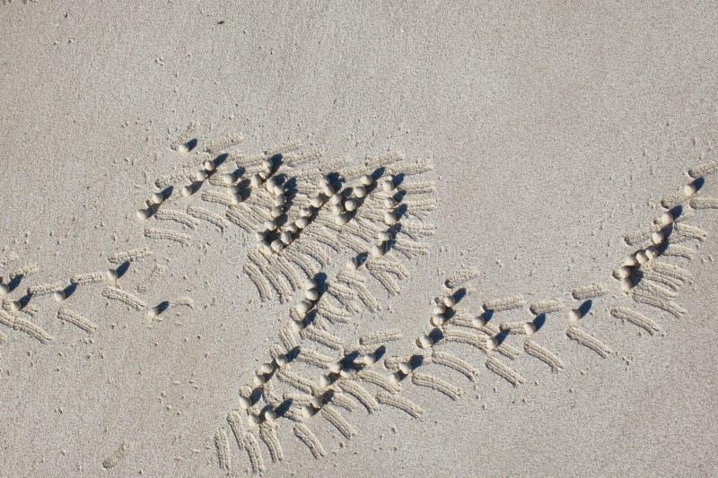 Teste padrão desenvolvido na areia das excreções do caranguejo foto de stock