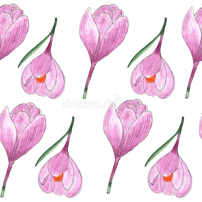 Teste padrão do açafrão da flor selvagem com aquarela em um fundo branco ilustração do vetor
