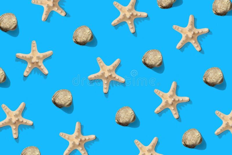 Teste padrão do escudo da estrela do mar e do mar no azul Fundo minimalistic do verão Vista superior, configura??o lisa fotos de stock